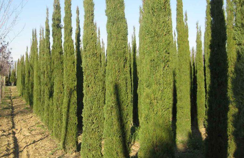 Piante-Ornamentali-Pacelli-Piante-Arezzo-Perugia-3